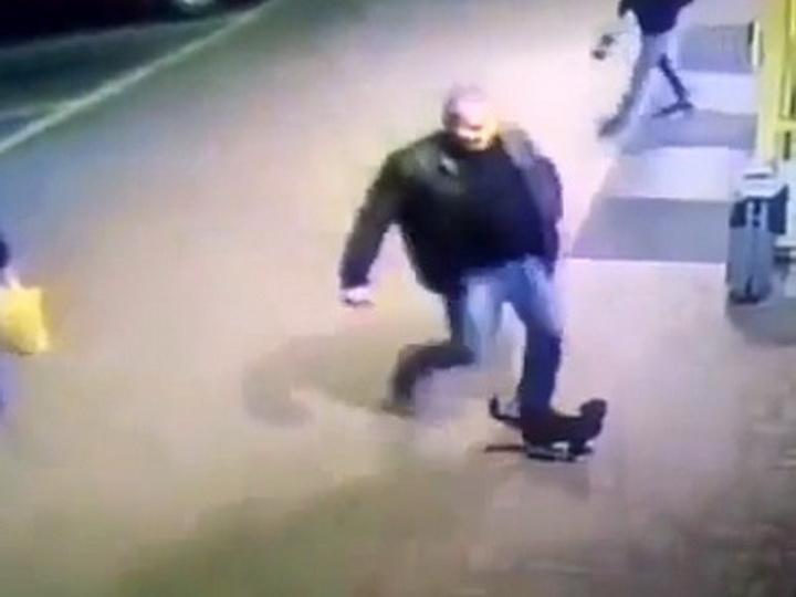 Белорусского правоохранителя сократили зато, что онпнул котенка