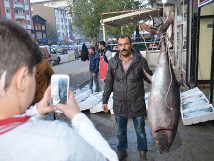 Купленная в Азербайджане рыба стала в Турции сенсацией - ФОТО