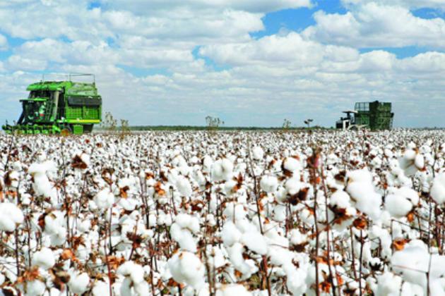 ВАзербайджане вянваре-октябре производство продукции АПК возросло на4%