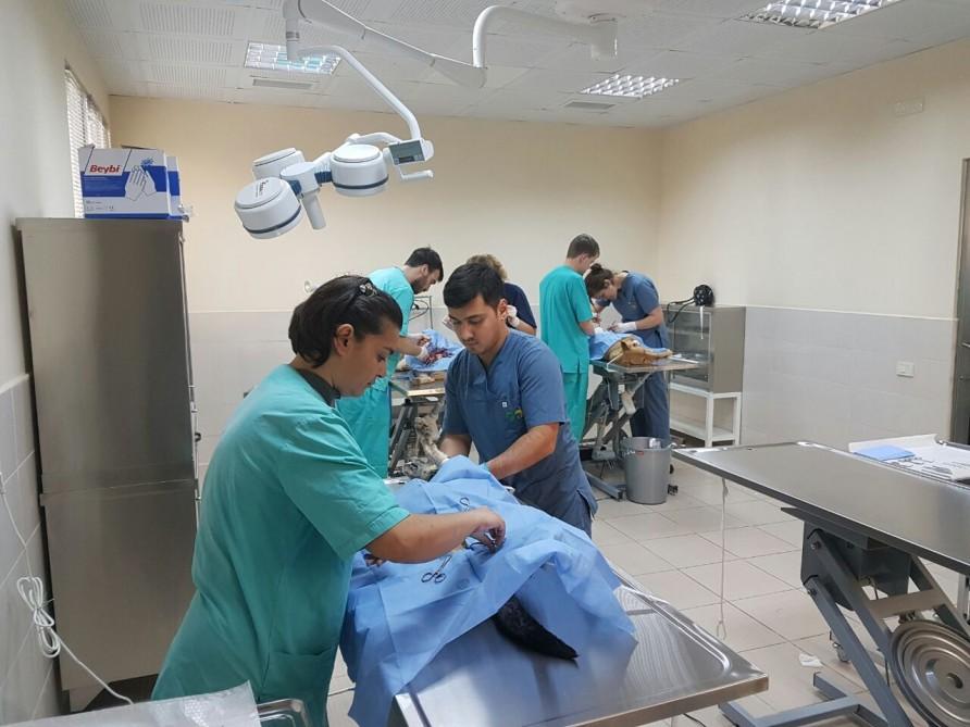 Sahibsiz itlərin sterilizasiyası üzrə aksiya keçirilir – FOTO