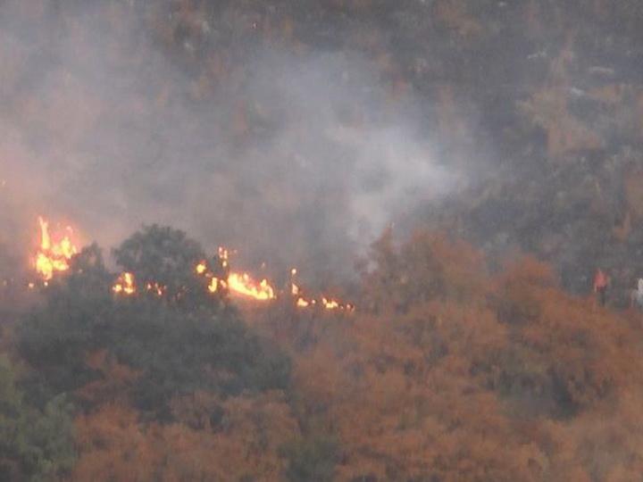 Потушен пожар в Гахском районе близ лесополосы - ОБНОВЛЕНО
