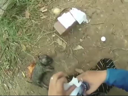 Вьетнамец спас тонущего щенка, сделав ему искусственное дыхание - ВИДЕО