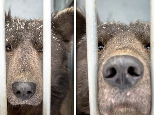 Медведь либо собачка? —новая головоломка вглобальной web-сети