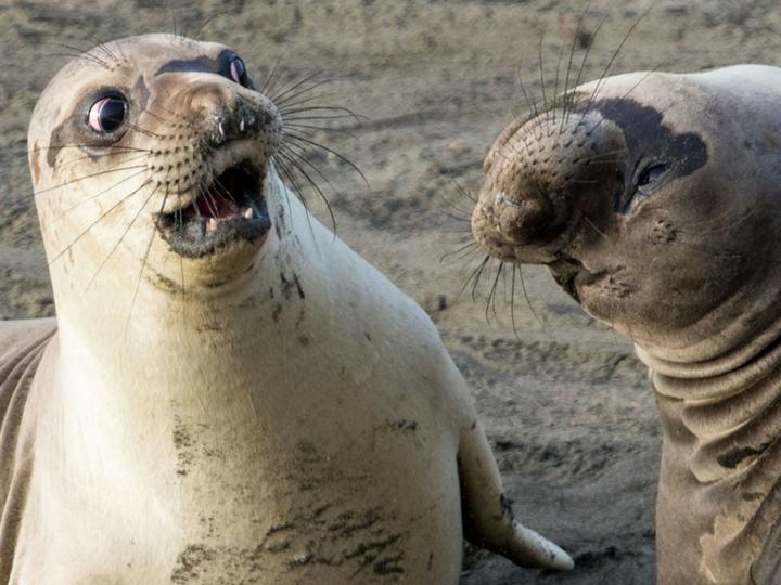 Ми-ми-ми: самые смешные фотографии животных – ФОТО