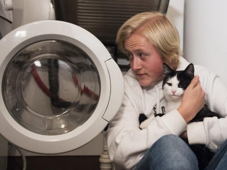В Норвегии кот пережил 40 минут стирки в стиральной машине – ФОТО