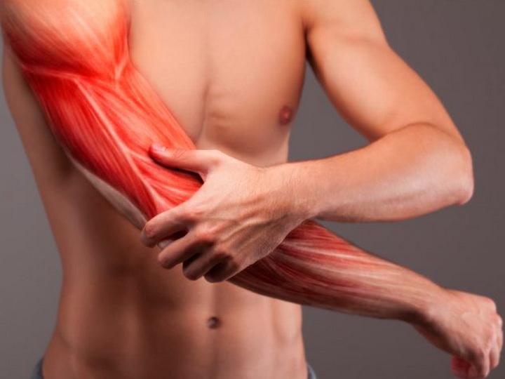 Искусственные мышцы вырастили из клеток кожи