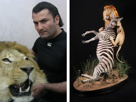 Чучело или искусство? Фаик Бабанлы и Асиф Ильясов о том, как подарить животным вечную жизнь – ФОТО