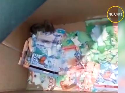 В Казахстане мыши погрызли деньги в банкомате - ВИДЕО