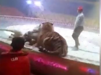 Видео девушек с хлыстом бьющих мужчин