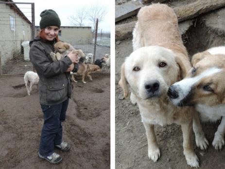 Собачий приют в Хачмазе: как утрата обернулась для одной девушки желанием помогать бездомным животным – ФОТО – ВИДЕО