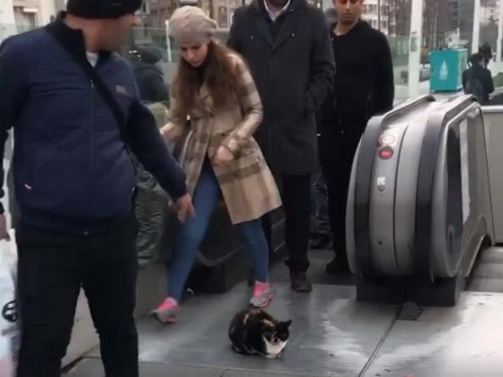 В центре Стамбула наглый кот заблокировал выход с эскалатора – ВИДЕО