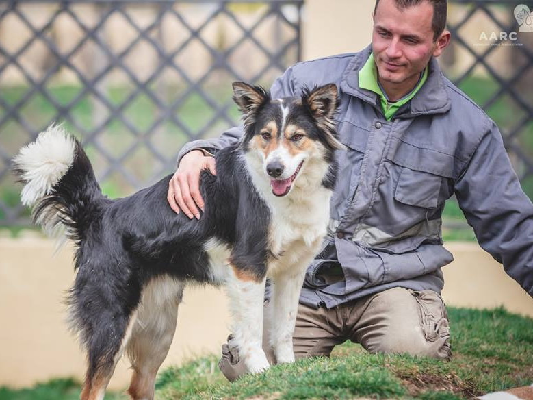 В Баку закрывается приют для собак и кошек, животных раздают в добрые руки - ФОТО
