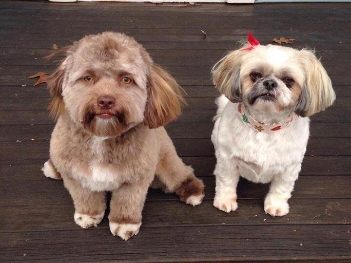 Пользователей соцсетей удивило фото собаки с человеческим лицом - ФОТО - ВИДЕО