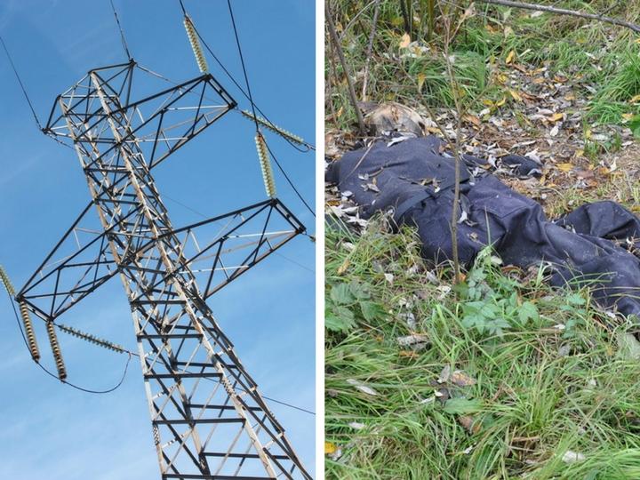 В Азербайджане родственники бросили в лесу тело подростка, пытавшегося украсть кабель