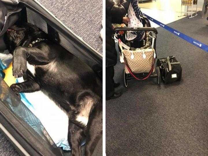 Собака умерла на багажной полке лайнера, куда ее потребовала поместить стюардесса - ФОТО