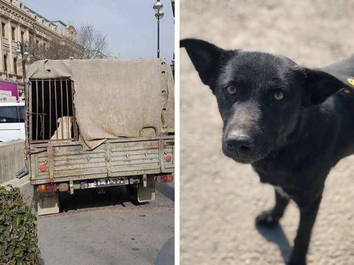 Заколдованный круг: О том, почему «Собачий ящик» отлавливает даже привитых собак, а улицы все еще полны дворняжками… - ФОТО