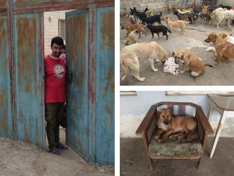 Фарид Мансуров об открытии круглосуточного ветеринарного центра и спасенных «хвостиках» - ФОТО