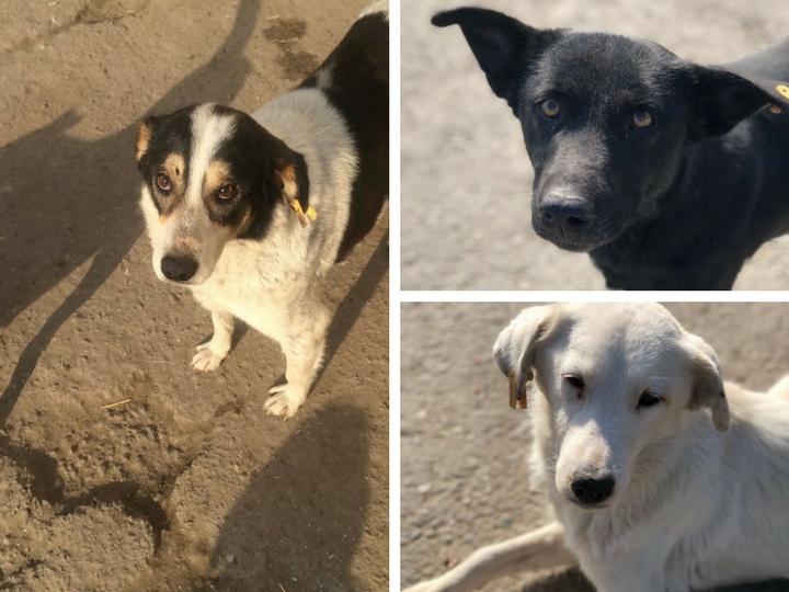 Жестокий отлов животных в Азербайджане прекращен, семь сотрудников «Собачьего ящика» уволены. Что будет дальше?