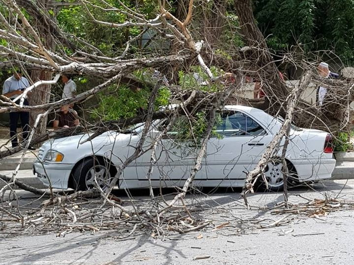 И снова о деревьях: в Баку высохшее дерево рухнуло на Mercedes – ФОТО - ВИДЕО