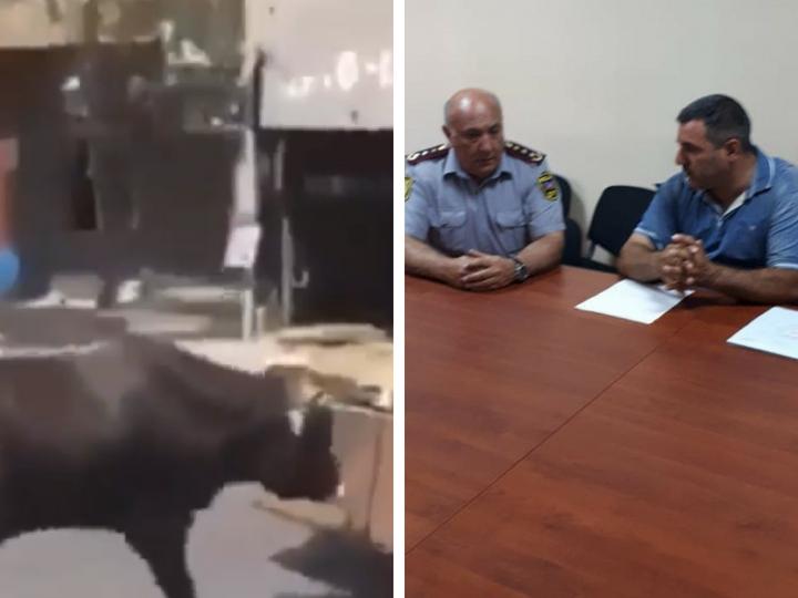 Живодер, тащивший корову волоком за машиной в Баку, раскаялся в содеянном - ФОТО – ВИДЕО - ОБНОВЛЕНО