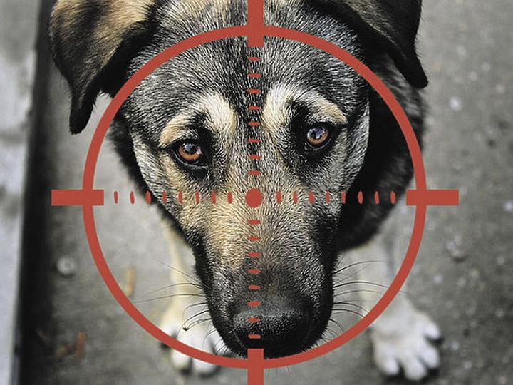 В Баку задержан мужчина, расстреливавший собак на улице
