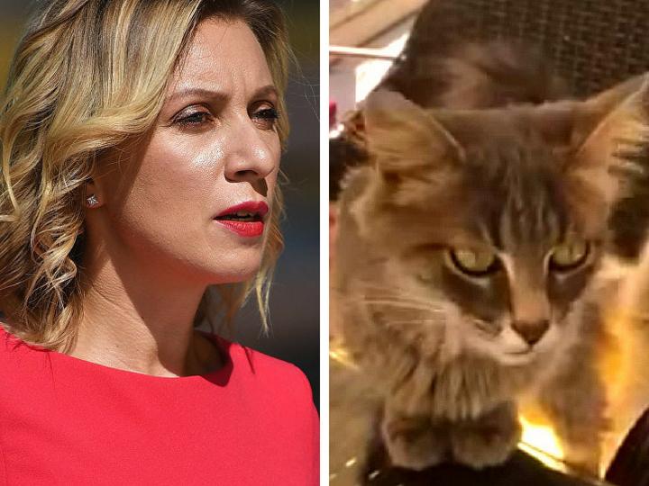 Анкара, Захарова и турецкие коты: Лицо российского МИД показала «захватчиков» своего завтрака – ВИДЕО – ФОТО