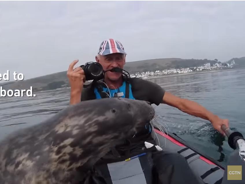 Давай дружить! В Англии тюлень пытался залезть к туристу в байдарку – ВИДЕО