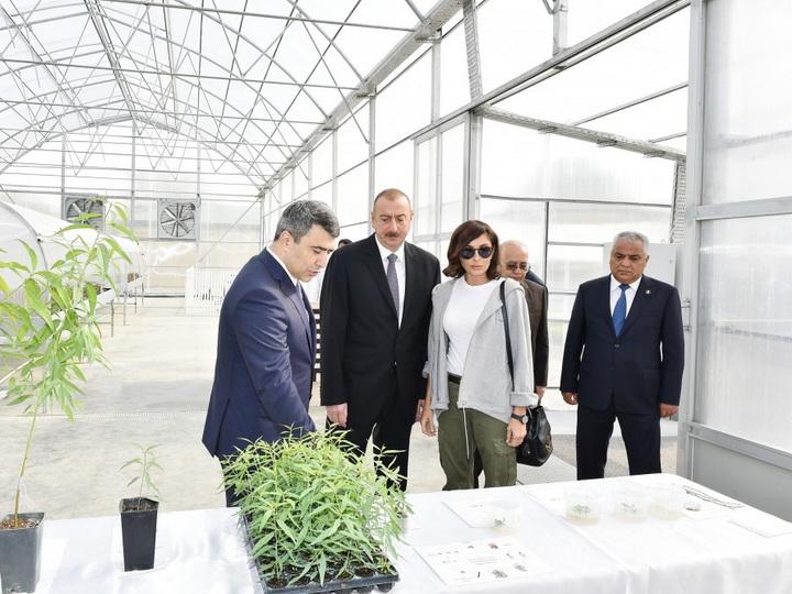 Президент Ильхам Алиев ознакомился в Губе с питомником саженцев Научно-исследовательского института фруктоводства и чаеводства