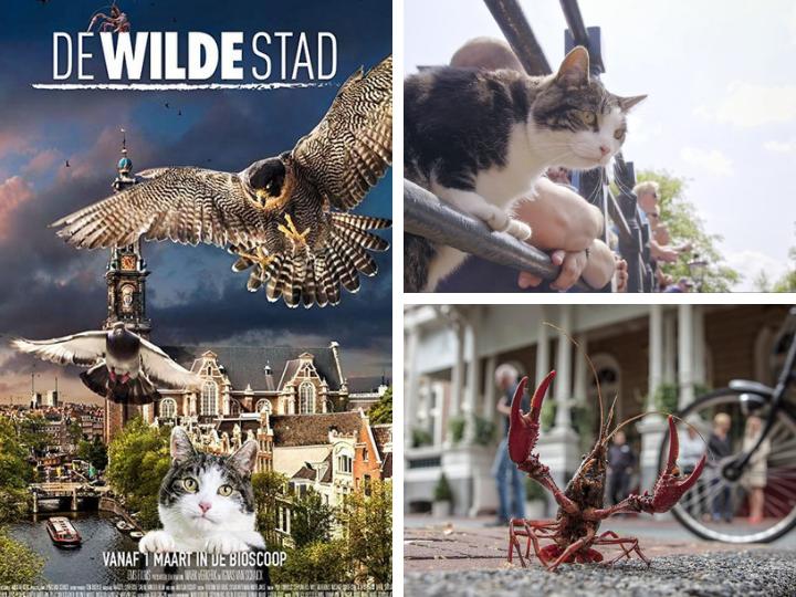IX Европейский кинофестиваль: Амстердам глазами кота и многое другое – ФОТО – ВИДЕО