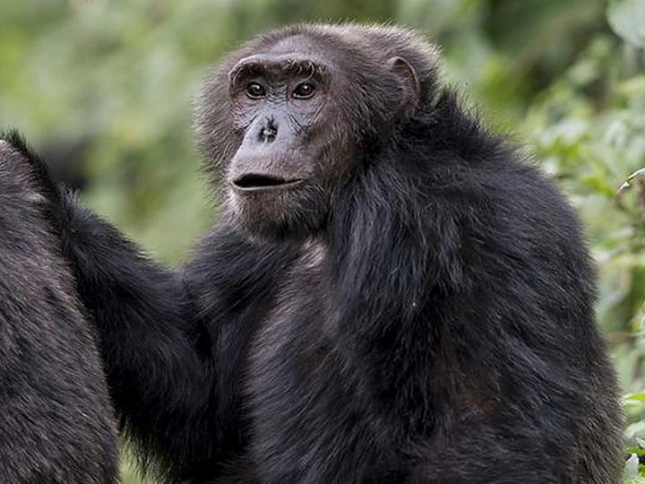 В Индии группа обезьян насмерть закидала мужчину кирпичами