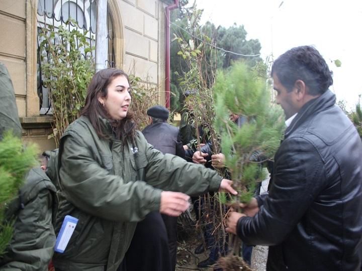 """""""Hər ailə ağac əksin"""" aksiyası çərçivəsində 8 minə yaxın ağac tingi paylanılıb"""