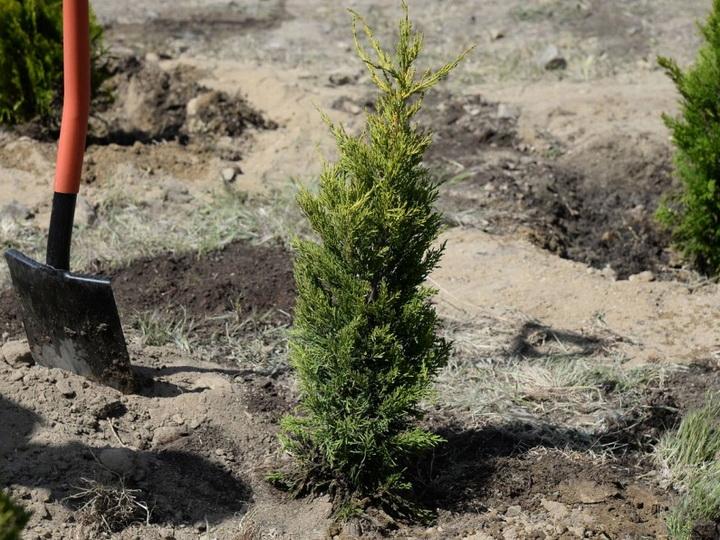 По случаю 100-летнего юбилея АДР будет посажено 100 тысяч деревьев