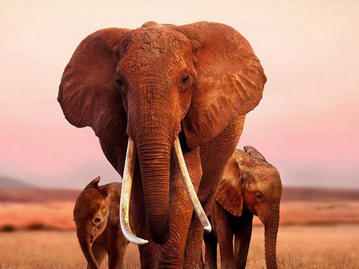Всем крупным животным на Земле грозит постепенное вымирание
