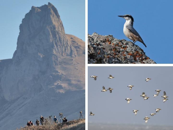 Сезонная миграция миллионов птиц через Бешбармаг vs трасса «Север – Юг»: риски и возможности – ФОТО – ВИДЕО