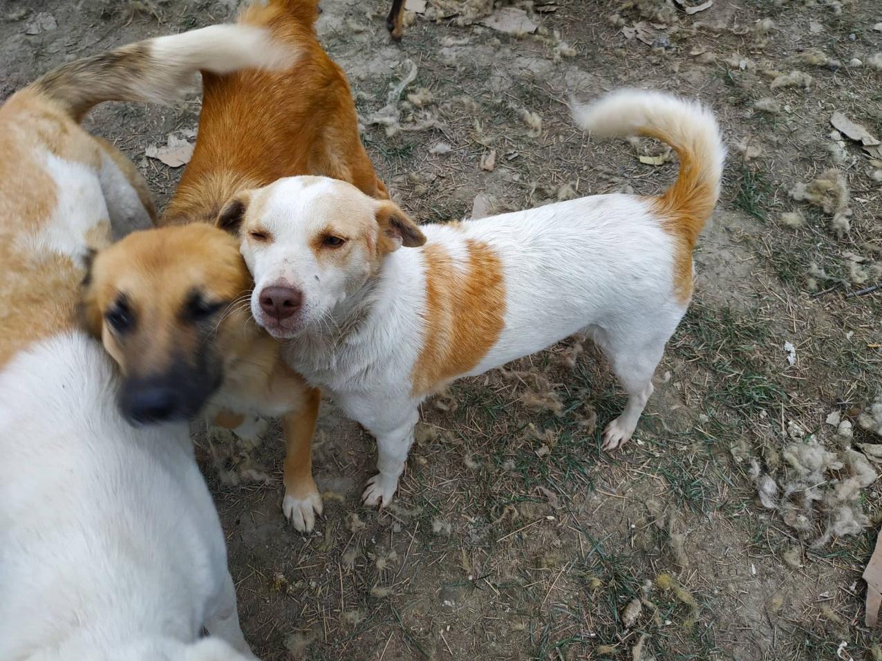 Приют для собак в Хачмазе нуждается в помощи: «Мы кормим собак хлебом, они голодные, среди них есть инвалиды» - ФОТО