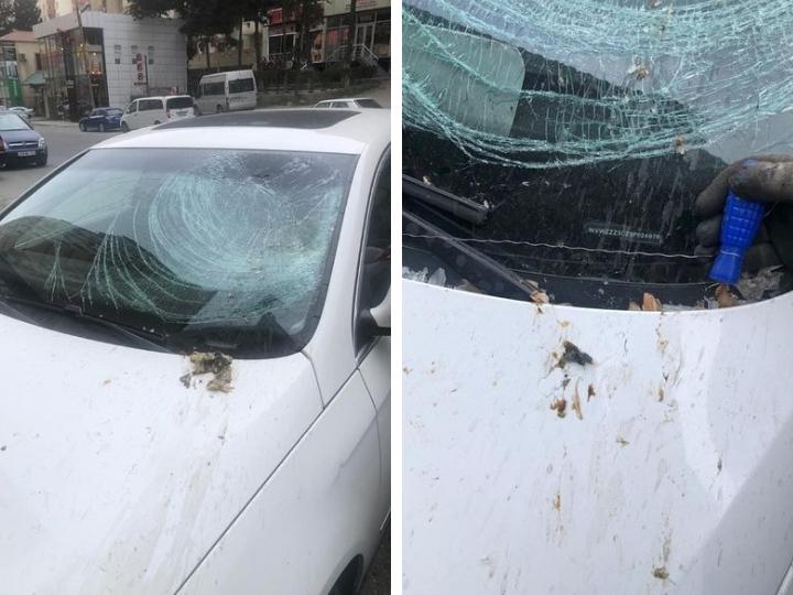 В Баку пакет с мусором метко угодил с новостройки прямо в машину – ФОТО