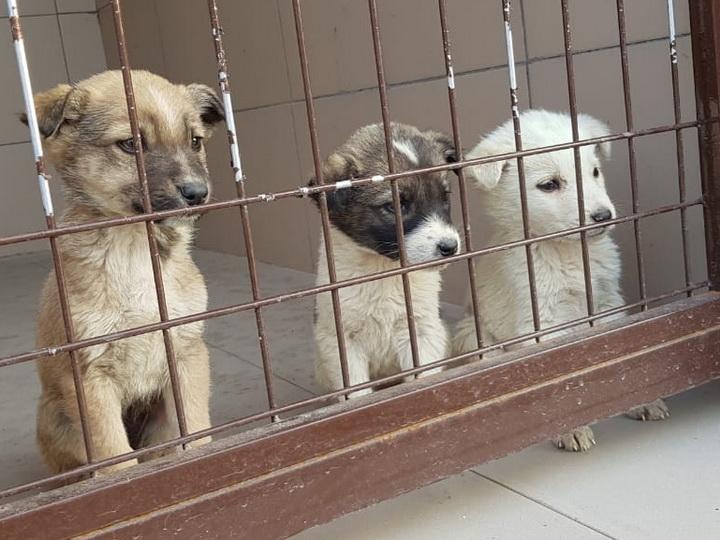 Забавные щенки из Toplan ждут своих новых хозяев - ФОТО