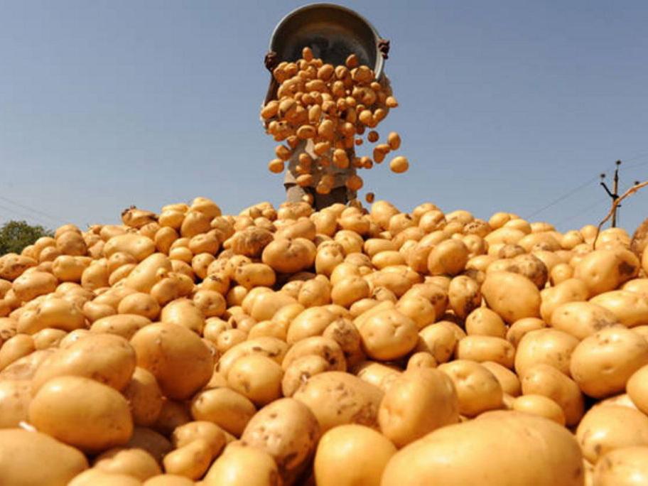 В Азербайджане приняты меры, направленные на снижение цен на лук, картофель и капусту