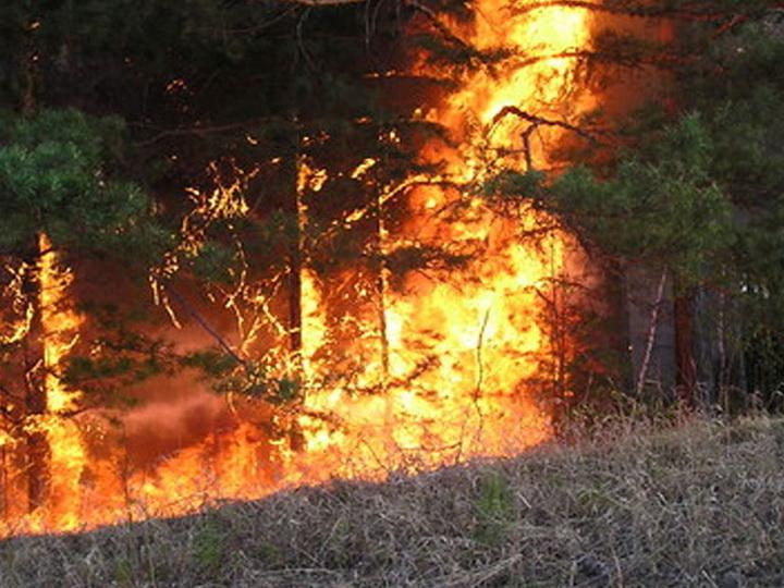 От забайкальских пожаров пострадали более 340 человек