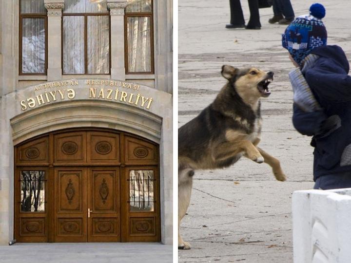Минздрав АР обратился к населению в связи с нападением собаки на ребенка