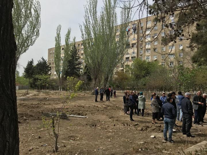 Генпрокуратура Азербайджана: Возбуждены уголовные дела по фактам вырубки свыше 4500 деревьев - ВИДЕО
