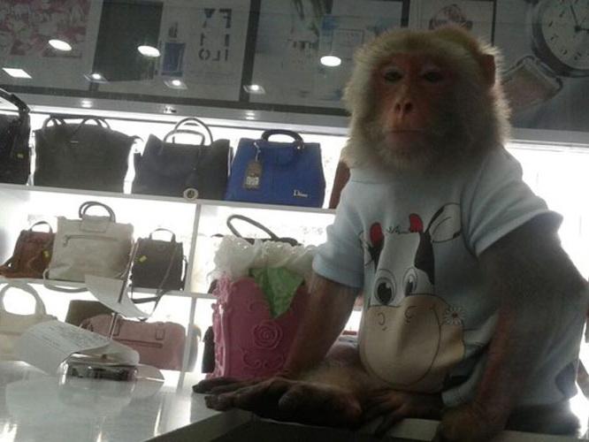 «Кинг-конг разбушевался»: В центре Баку обезьяна откусила ухо молодому человеку