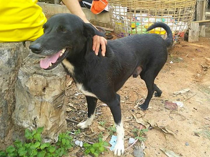 Собака нашла похороненного заживо младенца испасла ему жизнь