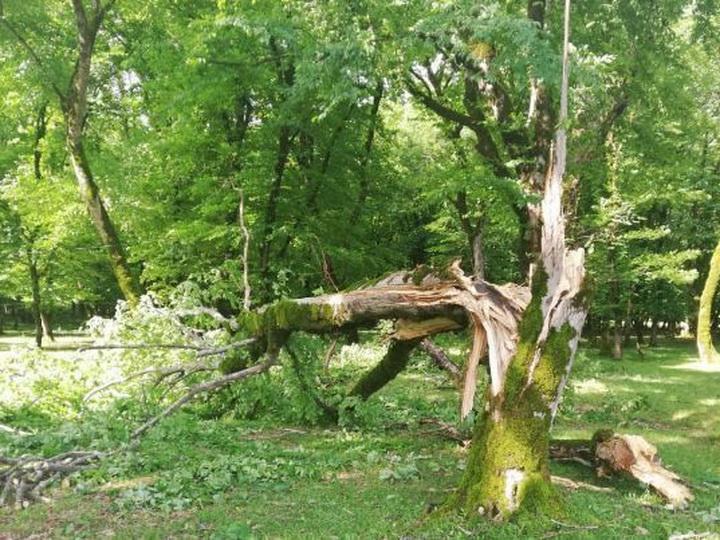 В Исмаиллы ветер повалил более 100 деревьев - ФОТО