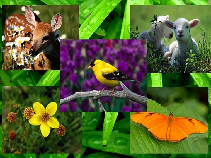 Bu gün Beynəlxalq Biomüxtəliflik Günüdür