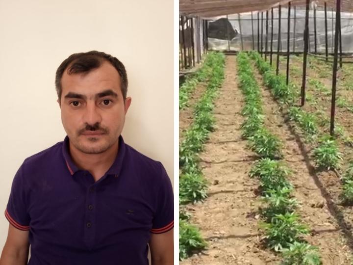 В бакинском поселке обнаружена наркоплантация - ФОТО
