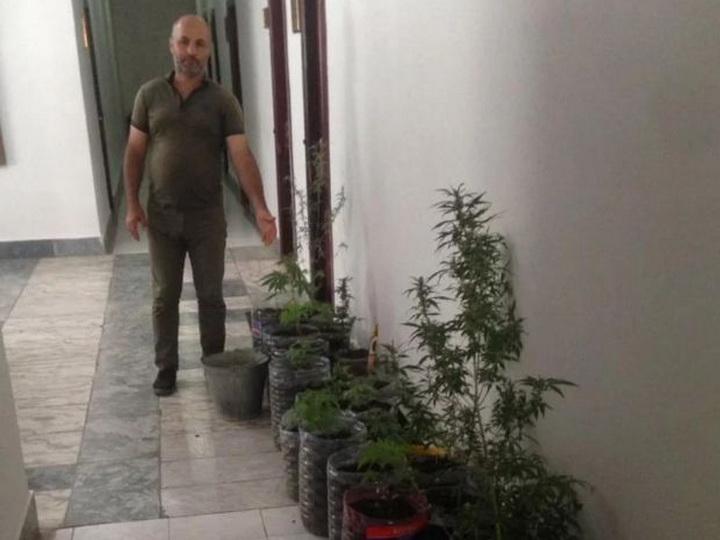 В Астаре задержаны супруги, занимавшиеся выращиванием конопли - ФОТО