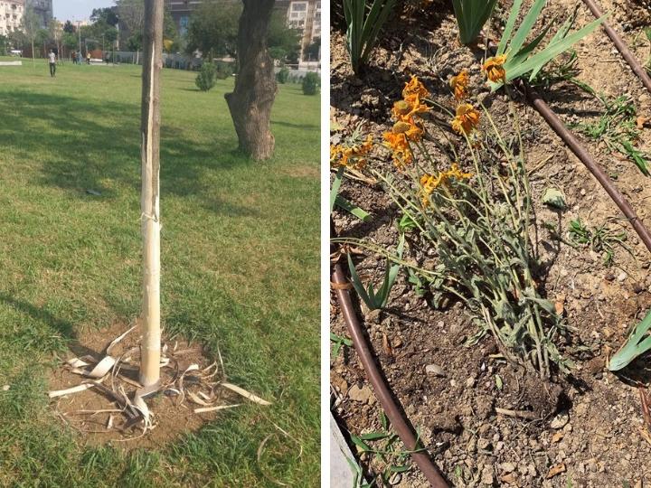 В новом Центральном парке обдирают кору деревьев и топчут цветы – ФОТОФАКТ