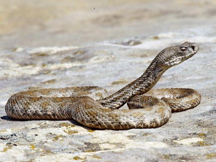 Управление Бакинского бульвара прокомментировало видеозапись со змеями - ВИДЕО