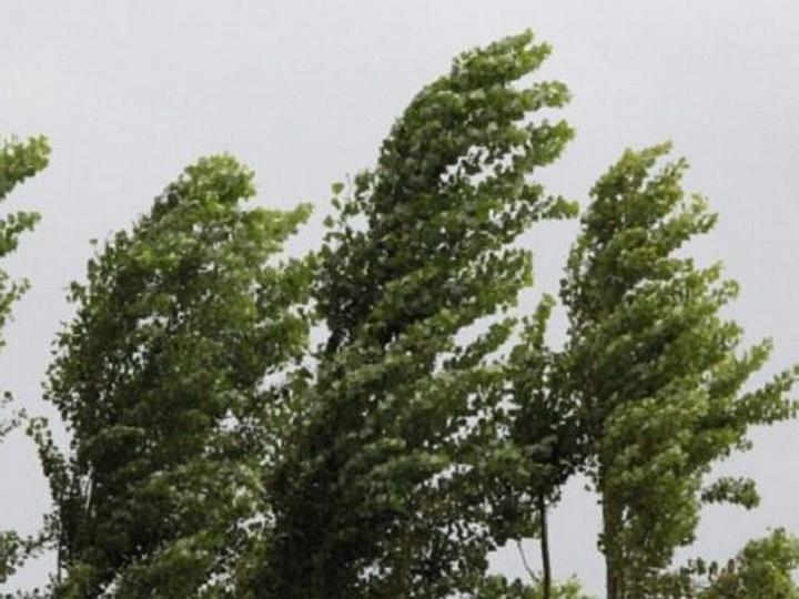 В субботу на Абшероне усилится северо-западный ветер